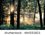 sunrise in the forrest | Shutterstock . vector #464331821