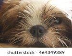 Dog Nose Shitzu
