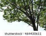 leaves | Shutterstock . vector #464430611