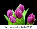 Purple Easter Tulips...