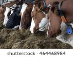 row of cow heads feeding on... | Shutterstock . vector #464468984