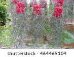 Spanish Moss Plant In A...
