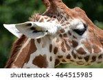 side view close up of giraffe's ... | Shutterstock . vector #464515985