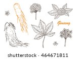 medicinal plants set. root ... | Shutterstock .eps vector #464671811