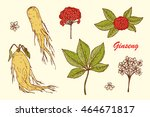medicinal plants set. root ... | Shutterstock .eps vector #464671817
