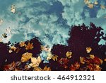 yellow plane tree leaves in the ... | Shutterstock . vector #464912321