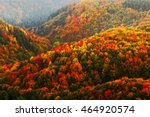 beautiful orange and red autumn ... | Shutterstock . vector #464920574