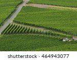 vineyards in germany | Shutterstock . vector #464943077