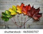 Autumn Maple Leaf Transition...