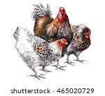 watercolor rooster and hen...   Shutterstock . vector #465020729