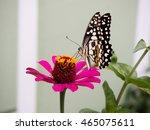 lovely butterfly sucking nectar ...   Shutterstock . vector #465075611