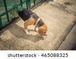 escaping dog | Shutterstock . vector #465088325