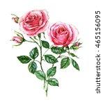 watercolor botanical... | Shutterstock . vector #465156095