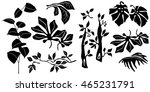black and white plants... | Shutterstock .eps vector #465231791