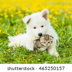 Stock photo puppy embracing tabby kitten on the lawn of dandelions 465250157