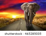 elephant walking on the road at ... | Shutterstock . vector #465285035