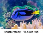 Blue Fish Dori From The Cartoo...
