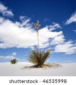 White Sands National Monument, New Mexico, USA with Yucca - stock photo
