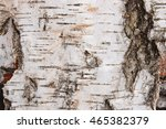Close Up View Of Birch Bark Fo...