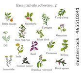 set of essential oil plants ... | Shutterstock .eps vector #465510341