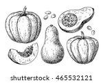 pumpkin and butternut squash... | Shutterstock .eps vector #465532121