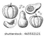 pumpkin and butternut squash... | Shutterstock .eps vector #465532121