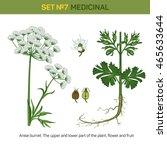 anise or aniseed burnet... | Shutterstock .eps vector #465633644