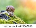 burgundy snail  helix  roman... | Shutterstock . vector #465646091