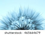 Photo Of Dandelion Silhouette...