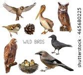 illustration of different birds ... | Shutterstock . vector #465680225