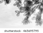 abstract leaves background | Shutterstock . vector #465695795