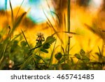 summer grass clover backlit in... | Shutterstock . vector #465741485