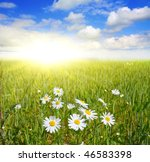 field of daisies and blue sky | Shutterstock . vector #46583398