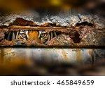 Siberian Tiger Eyes Internal...