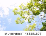 Sky And Treetop Background...