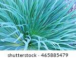 tillandsia tropical plant close ... | Shutterstock . vector #465885479