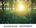 sunshine in park  | Shutterstock . vector #465940841
