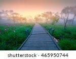flower wild siam tulips... | Shutterstock . vector #465950744