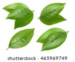 Citrus Leaves Isolated Without...
