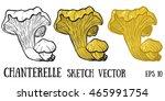 chanterelle.chanterelle... | Shutterstock .eps vector #465991754