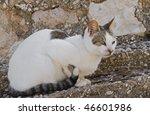 A free cat - stock photo