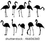 Flamingo  Ten Different Postures