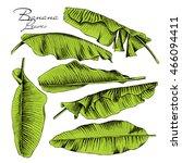 set of a green banana leaves.... | Shutterstock .eps vector #466094411