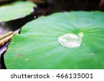 Water Drops On The Old Lotus...