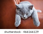 Young Cute Cat Resting On...