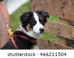 Stock photo domestic dog 466211504