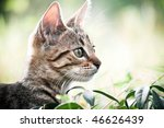 Stock photo cat play in the grass 46626439