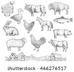 farm collection. hand drawn... | Shutterstock .eps vector #466276517