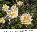 fragrant romantic beautiful... | Shutterstock . vector #466281695