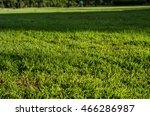 grass with sun light contrast... | Shutterstock . vector #466286987